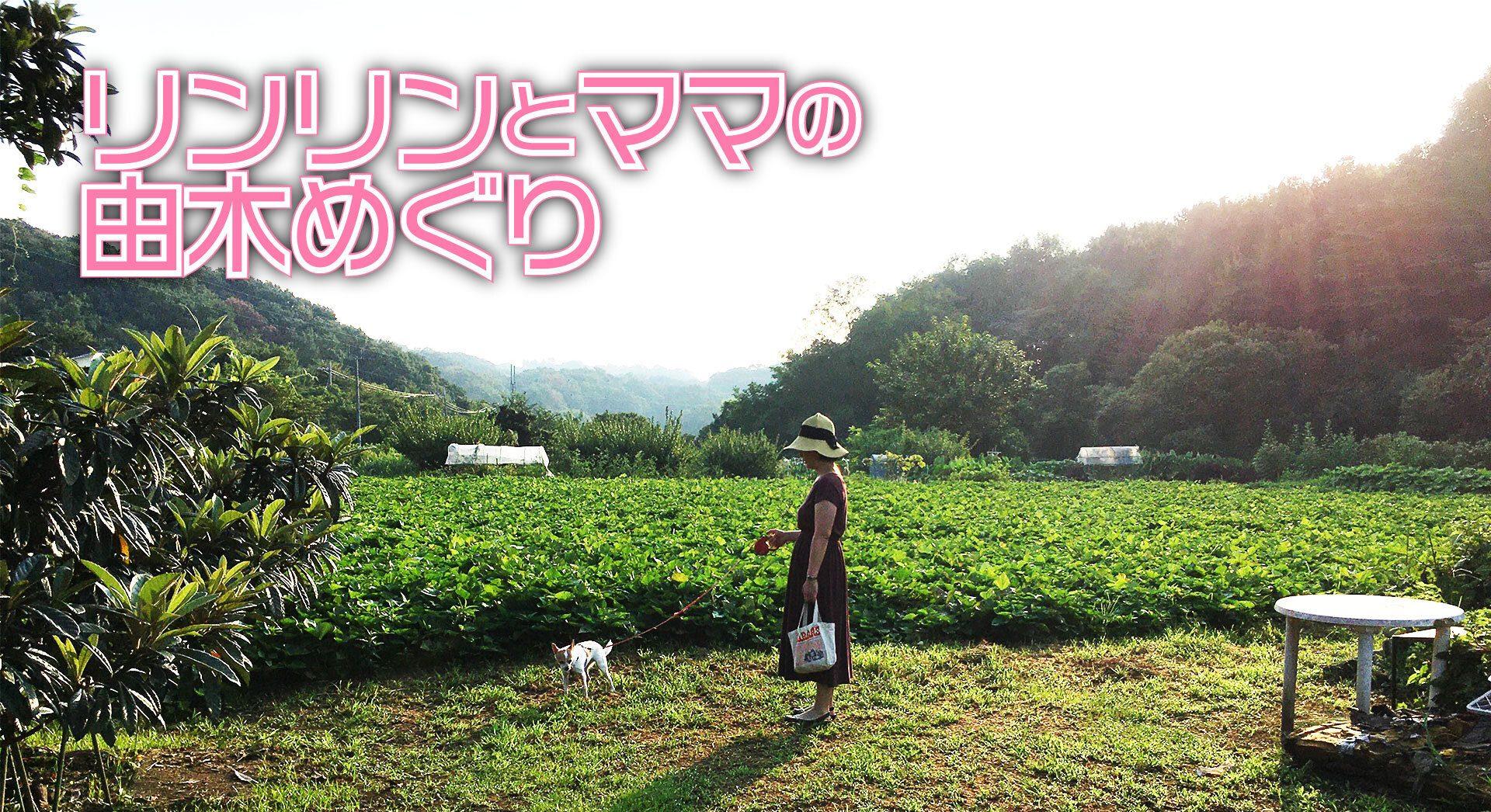 【新連載】リンリンとママの由木めぐり – 旬の夏野菜を求めて